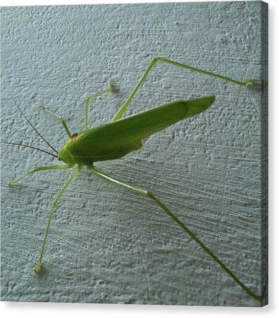 Grasshoppers Canvas Print - #grasshopper by Anand Mudaliar