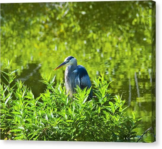 Great Blue Heron Hiding Canvas Print by J Larry Walker