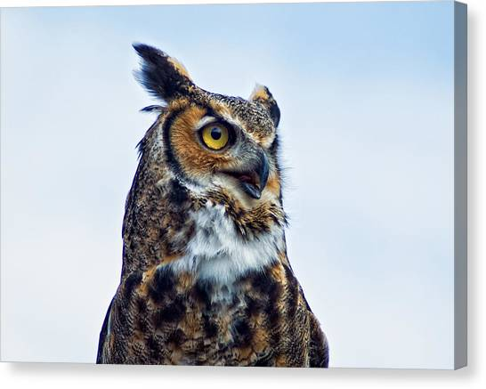 Great Horned Owl Canvas Print by Linda Pulvermacher