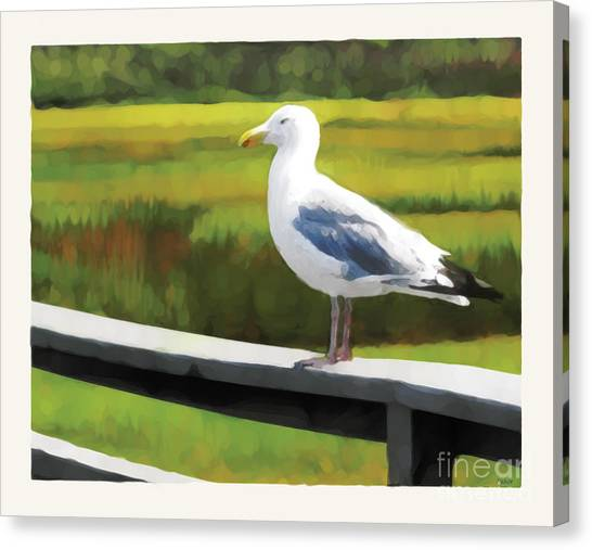 Gull One Canvas Print