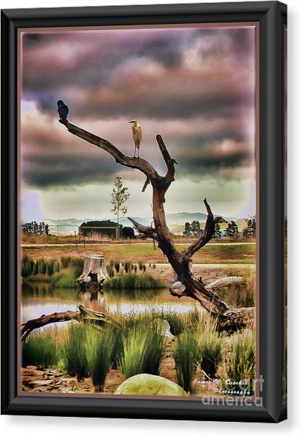 Hdr Wetlands Canvas Print
