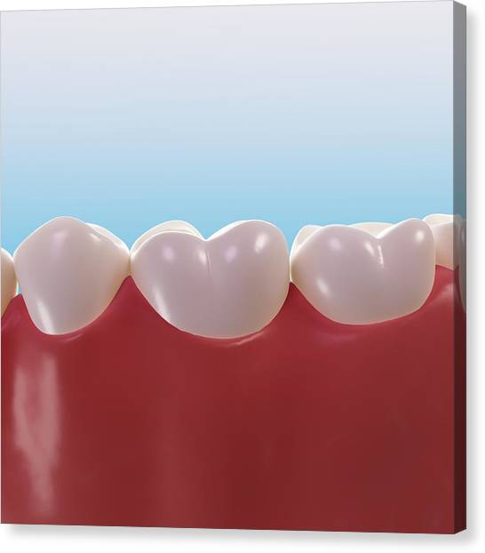 Healthy Teeth, Artwork Canvas Print by Sciepro