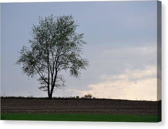 Horizon In April Canvas Print by JAMART Photography