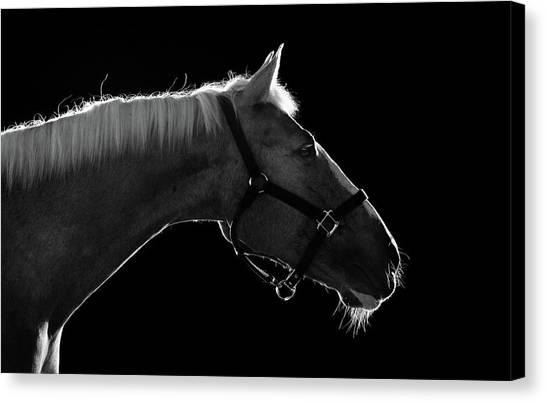 Close Up Horses Canvas Print - Horse by Arman Zhenikeyev - professional photographer from Kazakhstan