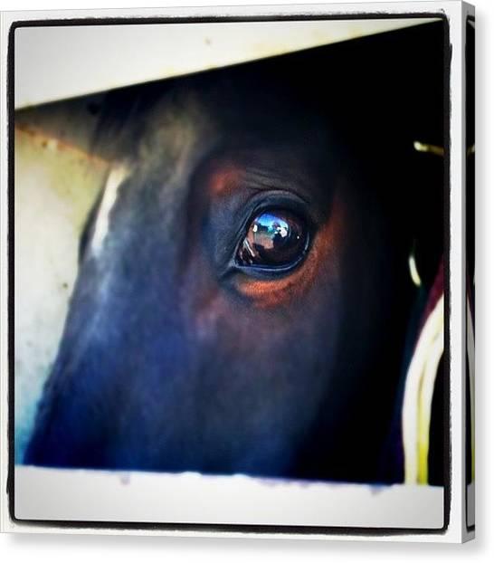 Thoroughbreds Canvas Print - #horse #maximus by Ashley Gamel