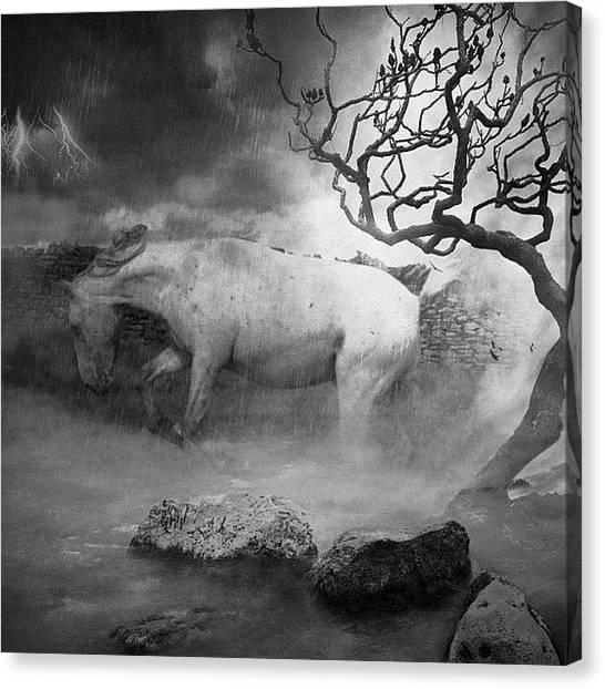 Lightning Canvas Print - Horse by Rachel Williams