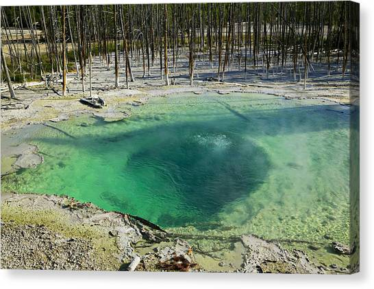 Wy Canvas Print - Hot Springs Yellowstone National Park by Garry Gay