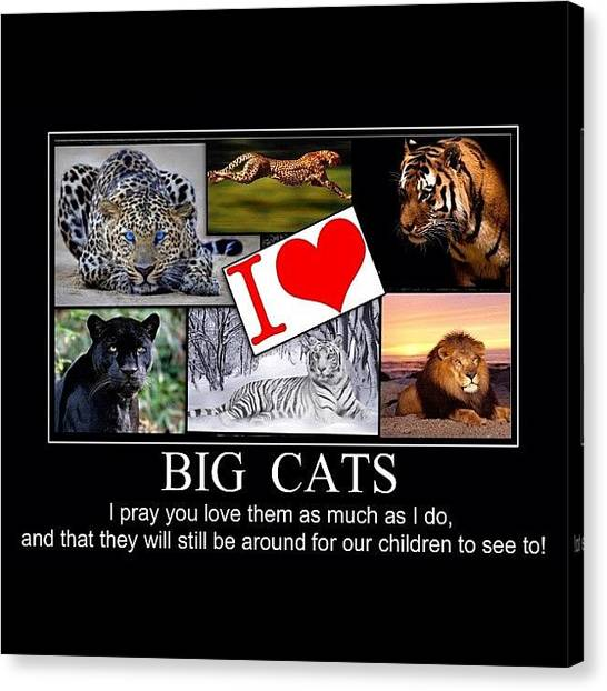 Panthers Canvas Print - I Love Big Cats by Nigel Williams