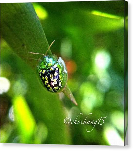 Ladybugs Canvas Print - #ig #igers #instago #photooftheday by Trizza Nina Pilapil