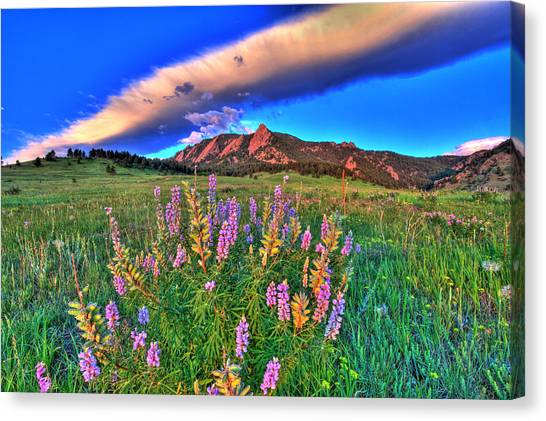 University Of Colorado Canvas Print - In The Moment by Scott Mahon
