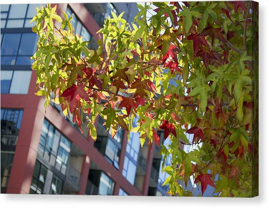 Inner City Autumn Canvas Print