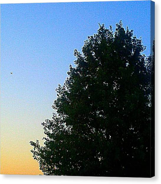 #instadroid #andrography #nexuss #tree Canvas Print by Kel Hill