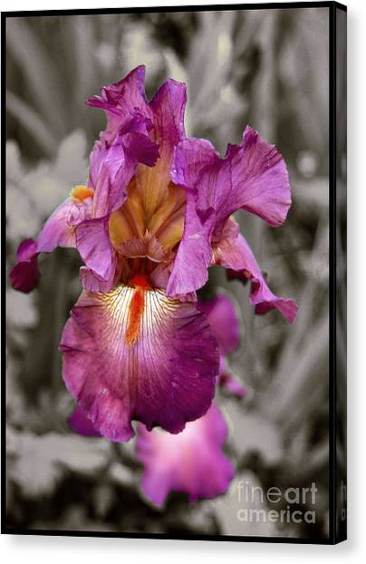 Iris Beauty Canvas Print
