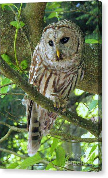 Keeping An Eye Out Canvas Print