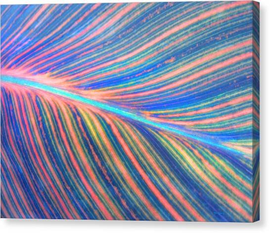 Leaf Colors Filtered Canvas Print