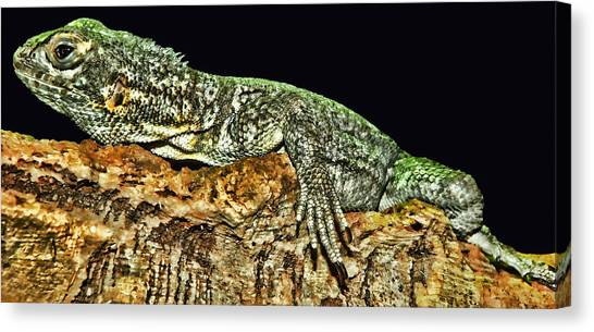 Iguanas Canvas Print - Let Me Strike A Pose by Lourry Legarde
