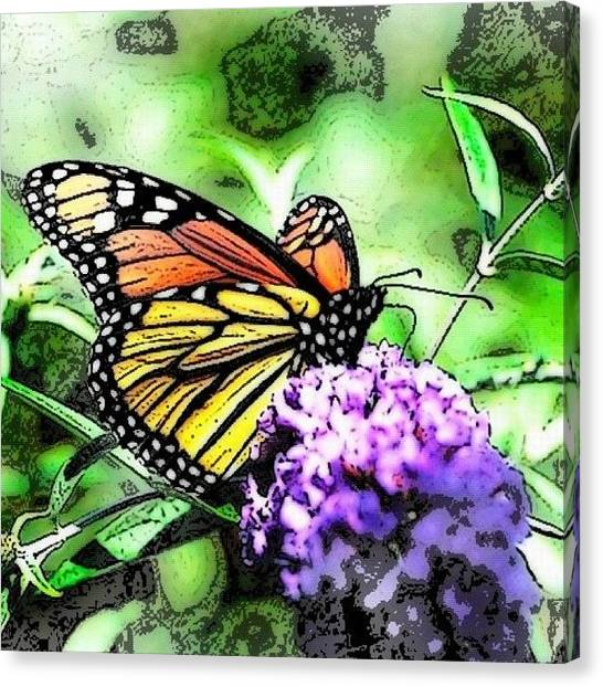Orange Canvas Print - Monarch Butterfly by Edward Sobuta