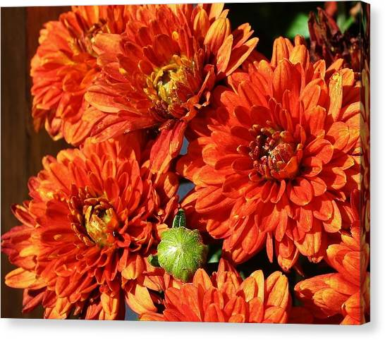 Mums The Word Canvas Print by Bruce Bley