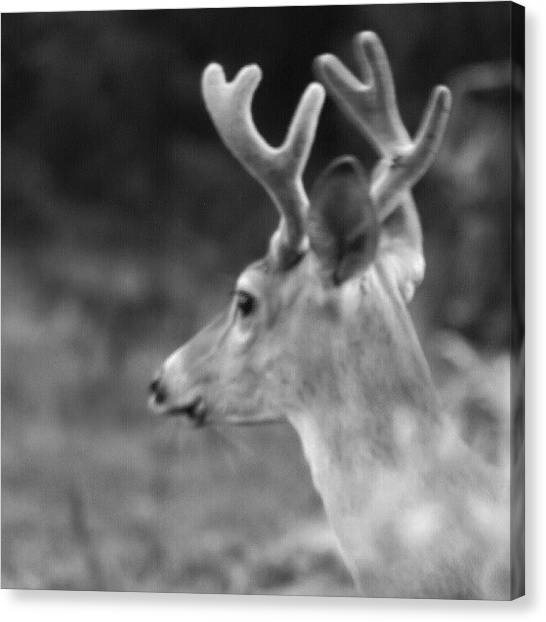 Gun Control Canvas Print - #nature #deer #dear #country by Dusty Anderson