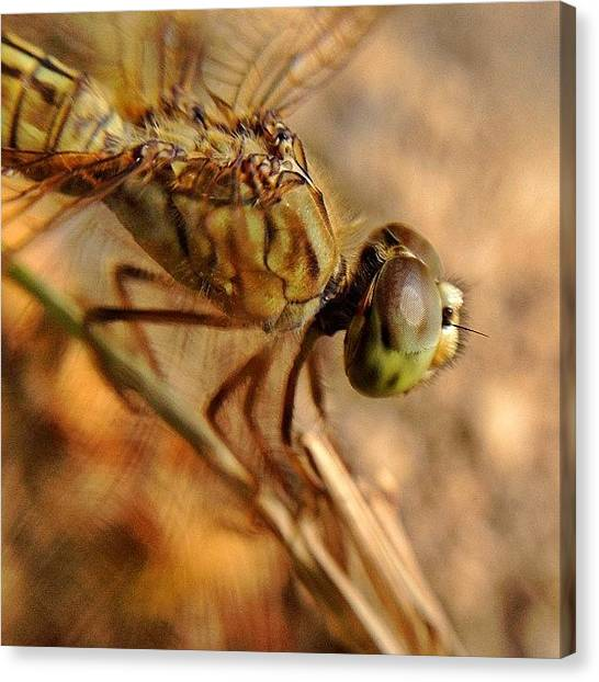 Dragons Canvas Print - #nature #naturelover #macro #macrolens by Sooonism Heng