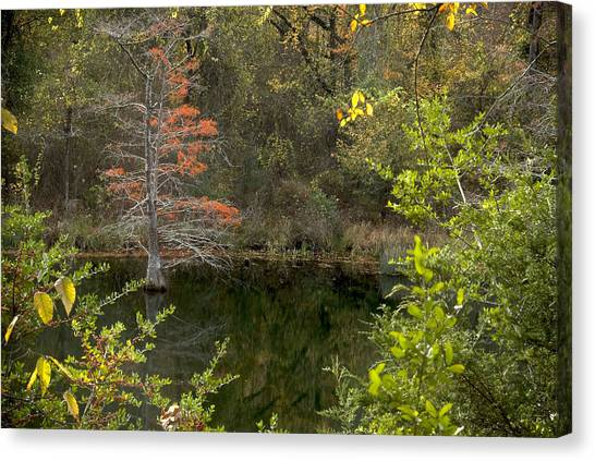 Natures Frame Canvas Print by Cindy Rubin
