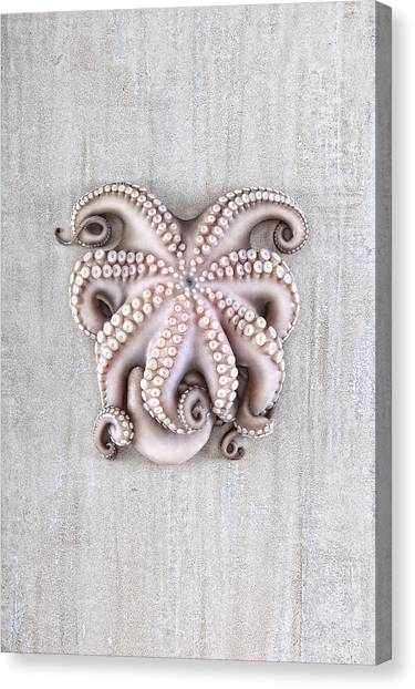 Octopus Canvas Print - Octopus by Fausto Favetta Photoghrapher