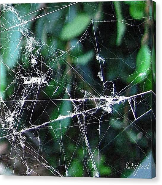 Spider Web Canvas Print - 1 Of 4 Parts Of The Same Big Spiderweb by Cynthia Post