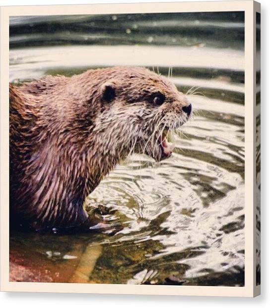 Otters Canvas Print - Otter by Daniel Kocian