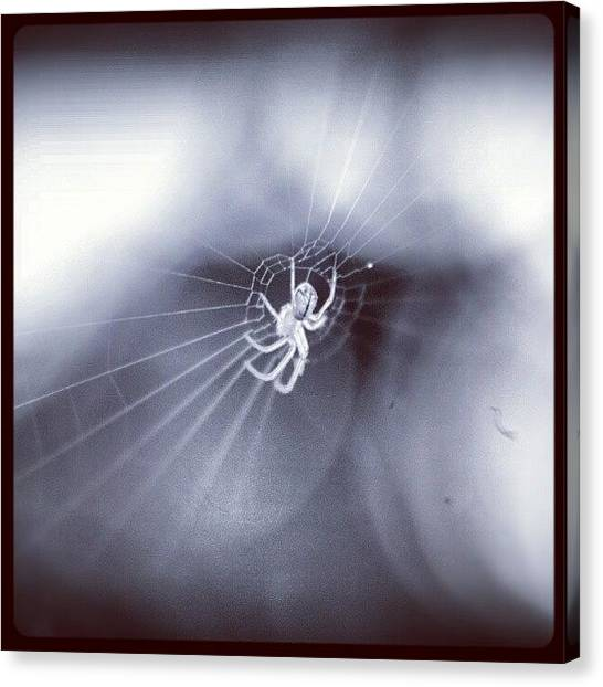 Spiders Canvas Print - Out Came The Sun by Mandy Shupp
