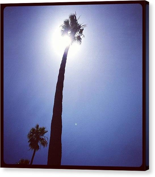 Santa Monica Canvas Print - Palm Eclipses Sun In Santa Monica by Lana Rushing
