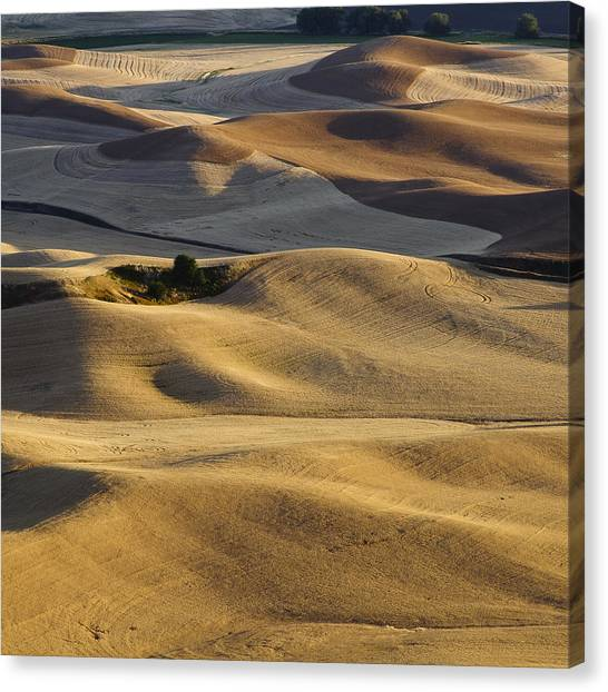 Palouse  Wa Canvas Print