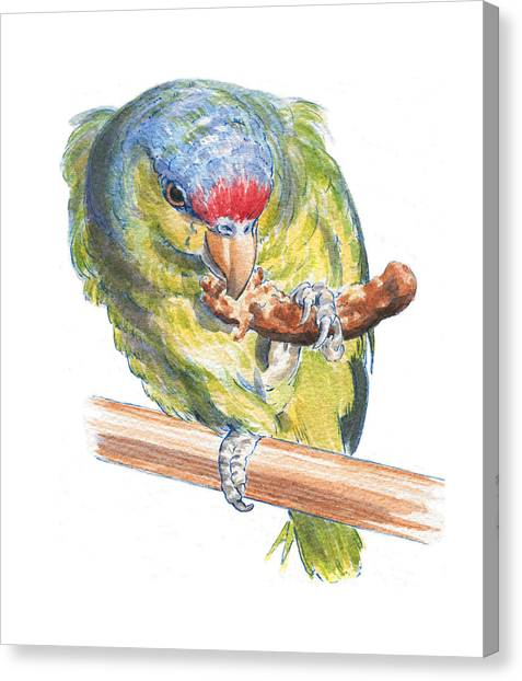 Parrot Eating Toast Canvas Print by Maureen Carter