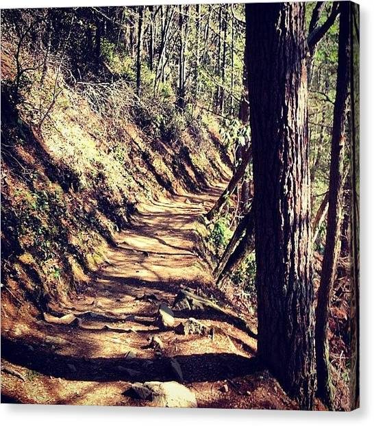 Forest Paths Canvas Print - #path #trail #hiking #trees #forest by Sarah  Woods