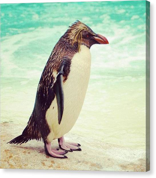 Antarctica Canvas Print - Penguin by Daniel Kocian