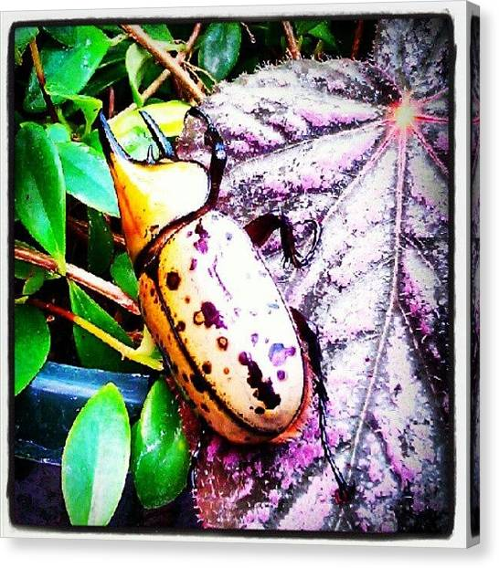 Beetles Canvas Print - #photooftheday #picoftheday by Yovonne Ahrens