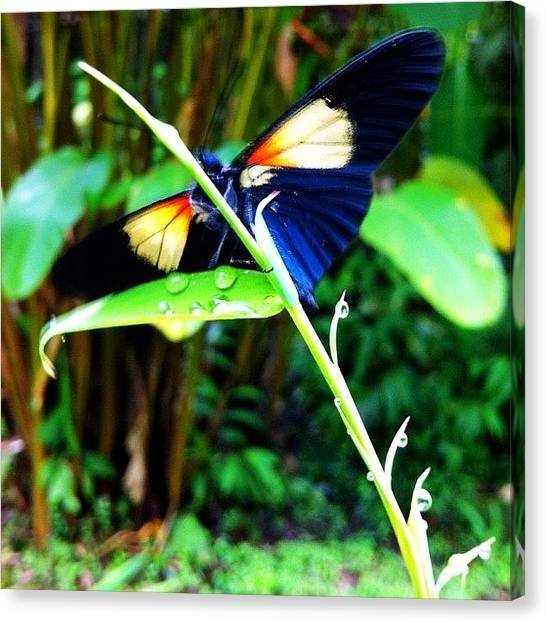 Rainforests Canvas Print - #picoftheday #nature #ecuador by Martin Endara