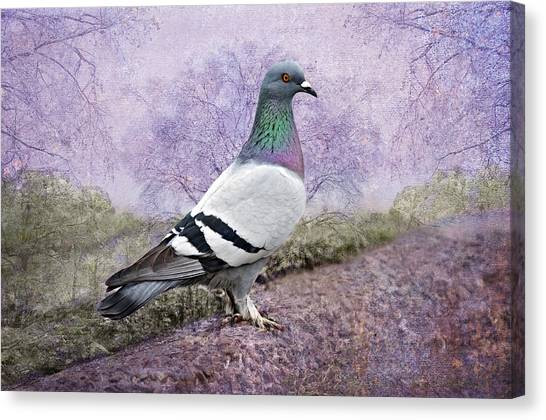 Pigeon In The Park Canvas Print by Bonnie Barry