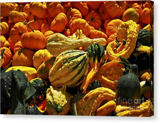 Gourds Canvas Print - Pumpkins And Gourds by Elena Elisseeva
