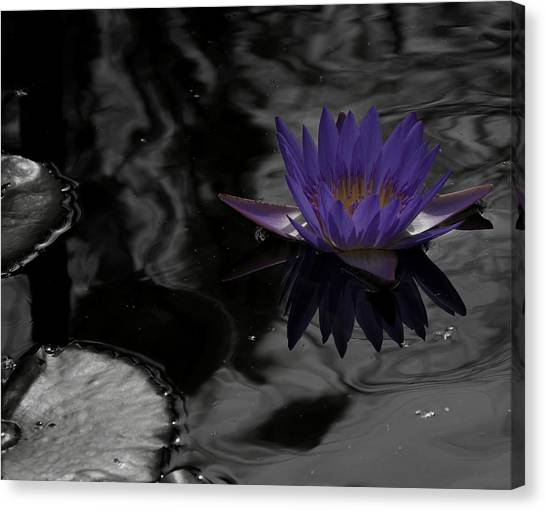 Purple Lilly In A Pond Canvas Print