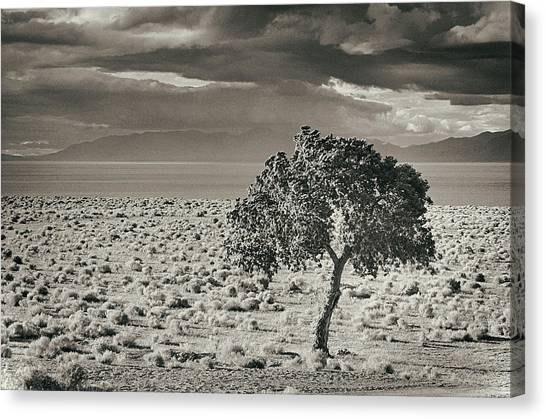 Pyramid Lake, Nevada, Usa Canvas Print by Mel Curtis