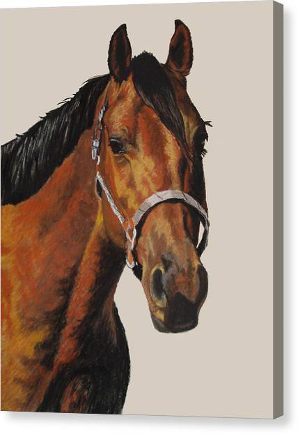 Quarter Horse Canvas Print by Ann Marie Chaffin