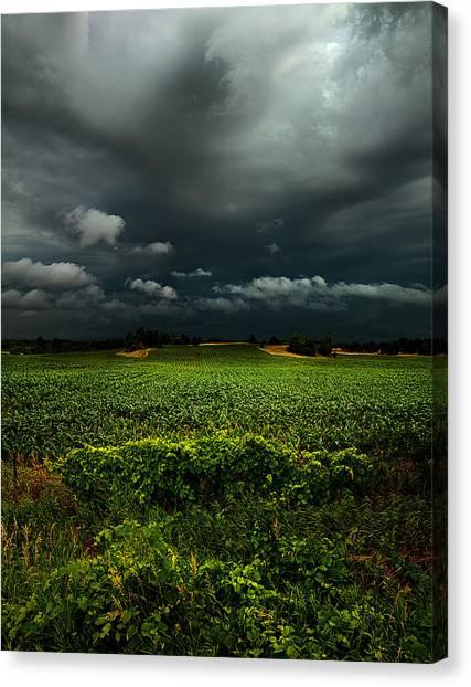 Causes Canvas Print - Rain by Phil Koch