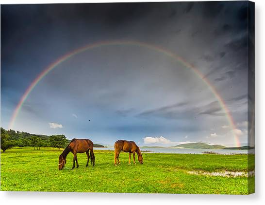 Rain Canvas Print - Rainbow Horses by Evgeni Dinev