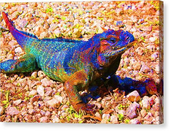 Rainbow Lizard Canvas Print by Katheryn Napier