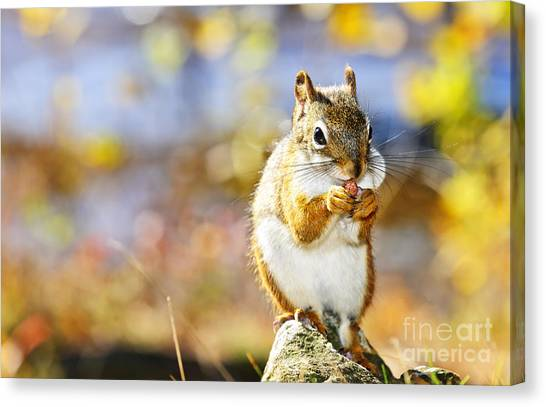 Fall Canvas Print - Red Squirrel by Elena Elisseeva