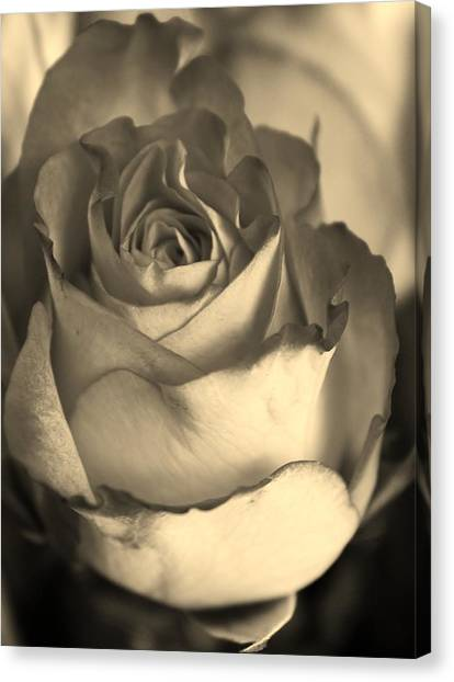 Rose In Sepia Canvas Print by Bruce Bley