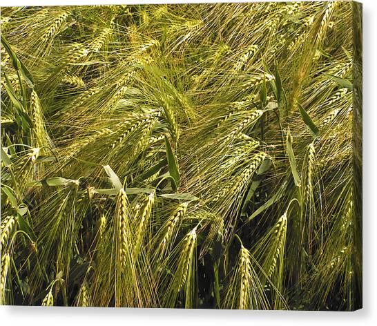 Rye Canvas Print by Design Windmill