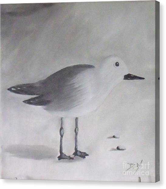 Seagull Canvas Print by Debra Piro