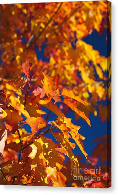 Sierra Autumn Leaves In Orange And Gold Canvas Print by ELITE IMAGE photography By Chad McDermott