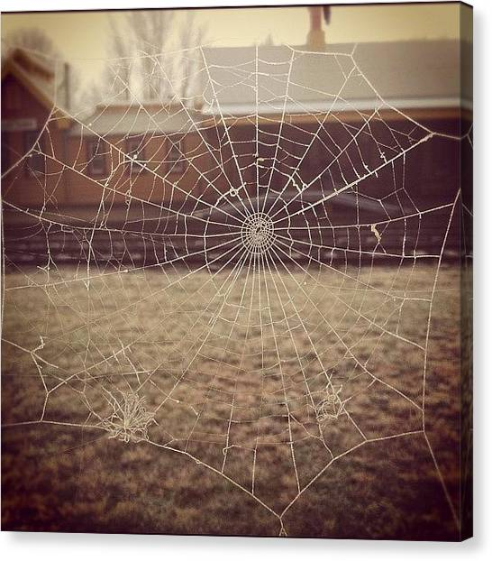 Spider Web Canvas Print - Spider's Frost by Kim Gourlay